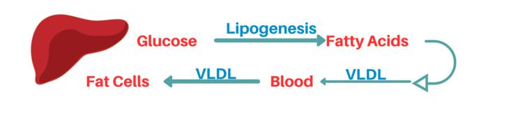 fat storing lipogenesis