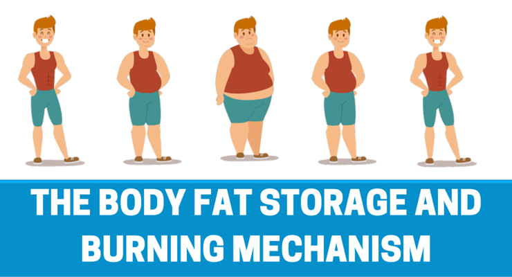 fat storing mechanism
