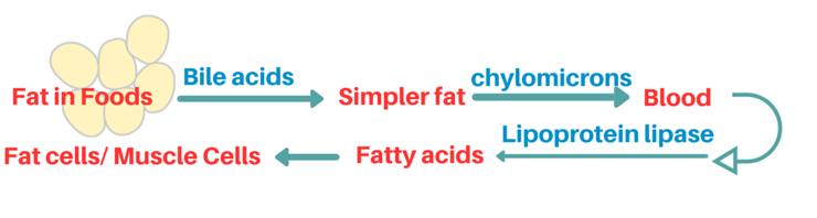 fat storing