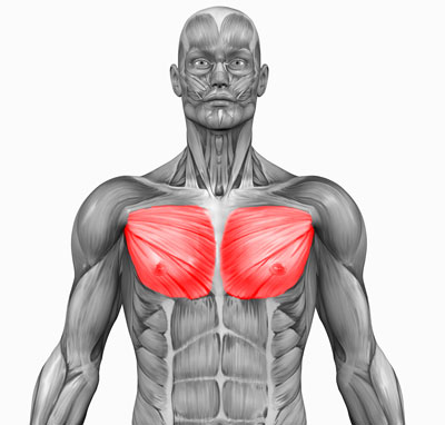 Ultimate Chest Workouts – The Best Chest Workout for Mass and Shape