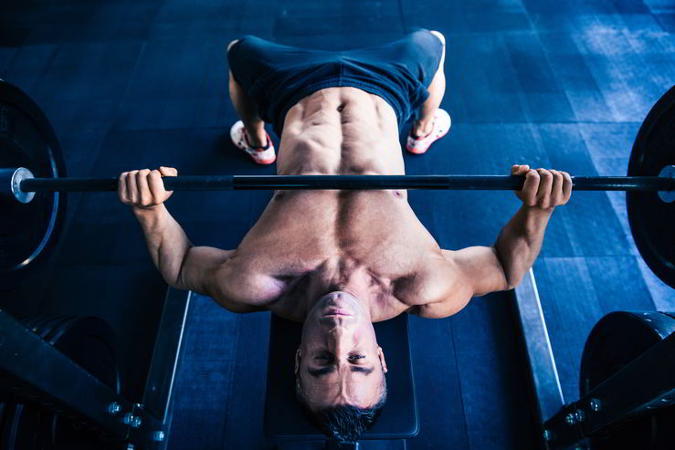 bench press muscle growth