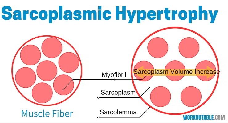sarcoplasmic hypertrophy