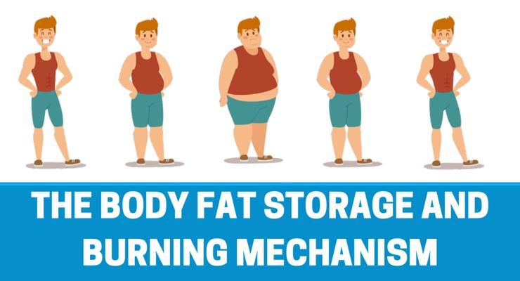 fat storing mechanism